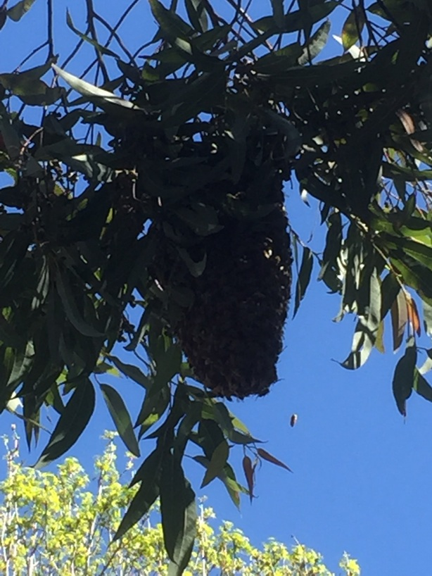 First time I've ever seen a beehive like this